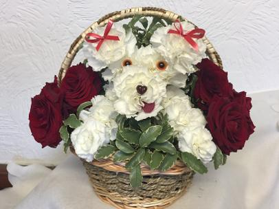 white flower puppy dog in basket